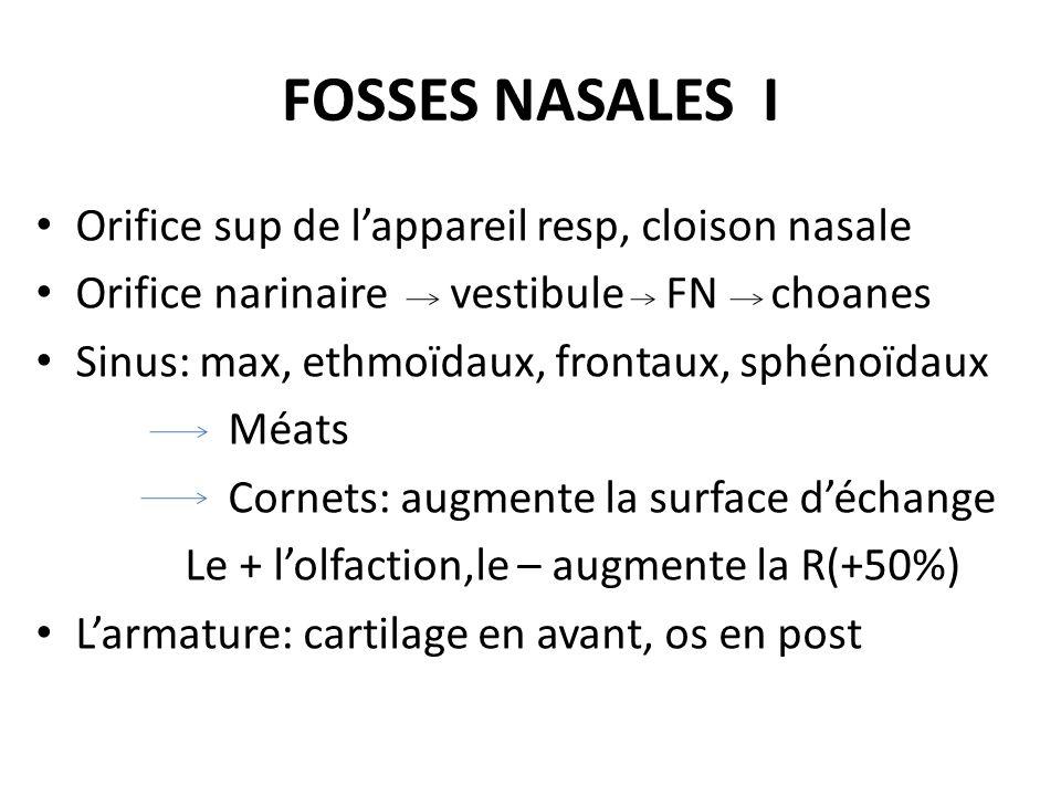 FOSSES NASALES I Orifice sup de lappareil resp, cloison nasale Orifice narinaire vestibule FN choanes Sinus: max, ethmoïdaux, frontaux, sphénoïdaux Mé