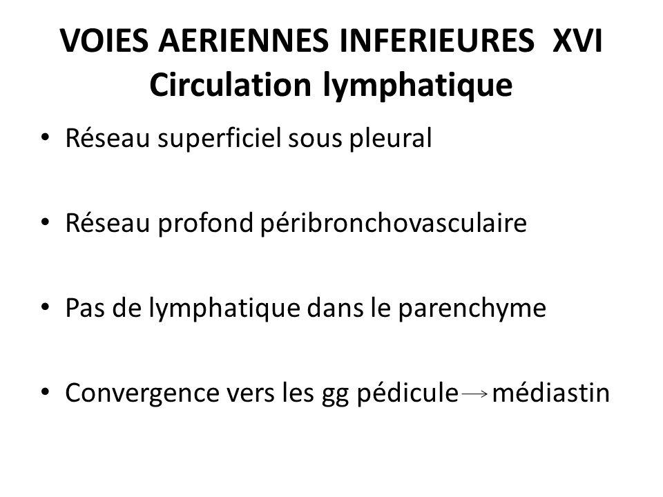 VOIES AERIENNES INFERIEURES XVI Circulation lymphatique Réseau superficiel sous pleural Réseau profond péribronchovasculaire Pas de lymphatique dans l