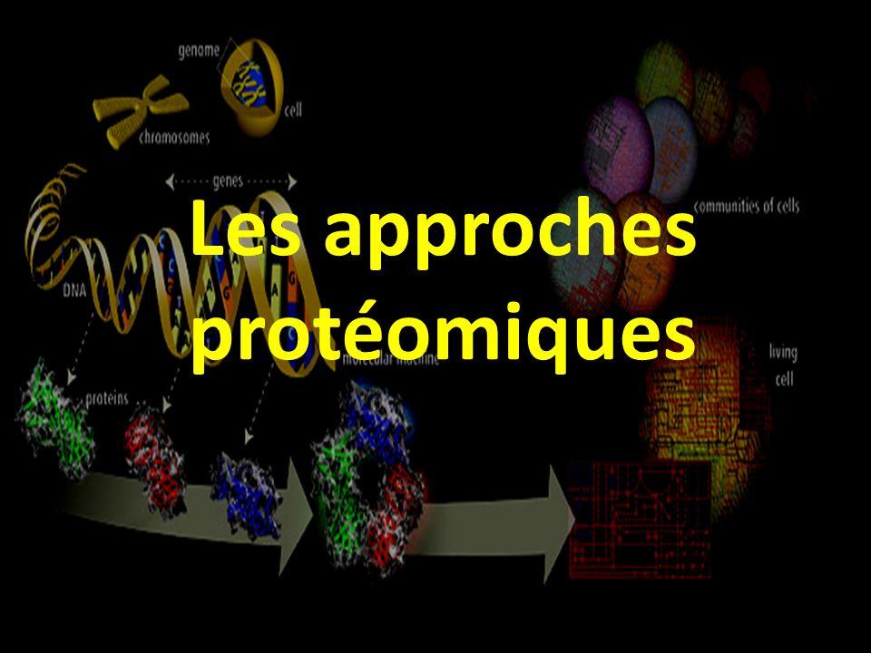 AEB20111 Marc Bonneu ESTBB 2008 Les approches protéomiques