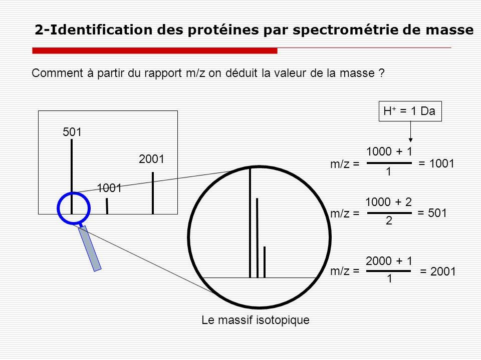 Comment à partir du rapport m/z on déduit la valeur de la masse ? 2-Identification des protéines par spectrométrie de masse m/z = 1000 + 1 1000 + 2 20