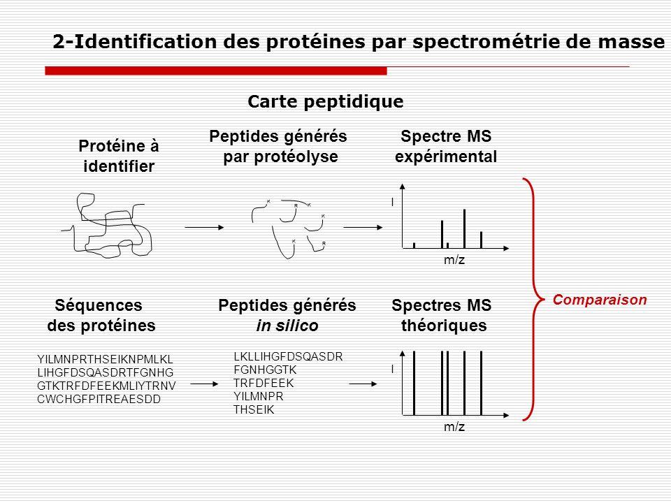 Protéine à identifier Peptides générés par protéolyse Spectre MS expérimental YILMNPRTHSEIKNPMLKL LIHGFDSQASDRTFGNHG GTKTRFDFEEKMLIYTRNV CWCHGFPITREAE