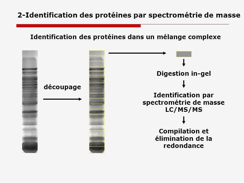 découpage Digestion in-gel Identification par spectrométrie de masse LC/MS/MS Compilation et élimination de la redondance Identification des protéines