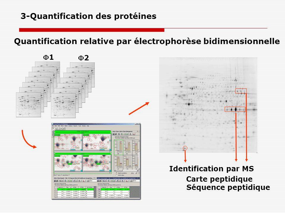 1 2 Identification par MS Carte peptidique Séquence peptidique Quantification relative par électrophorèse bidimensionnelle 3-Quantification des protéi