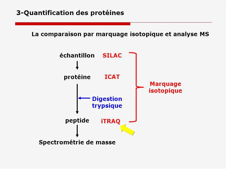 SILAC ICAT iTRAQ Digestion trypsique échantillon protéine peptide Spectrométrie de masse La comparaison par marquage isotopique et analyse MS Marquage