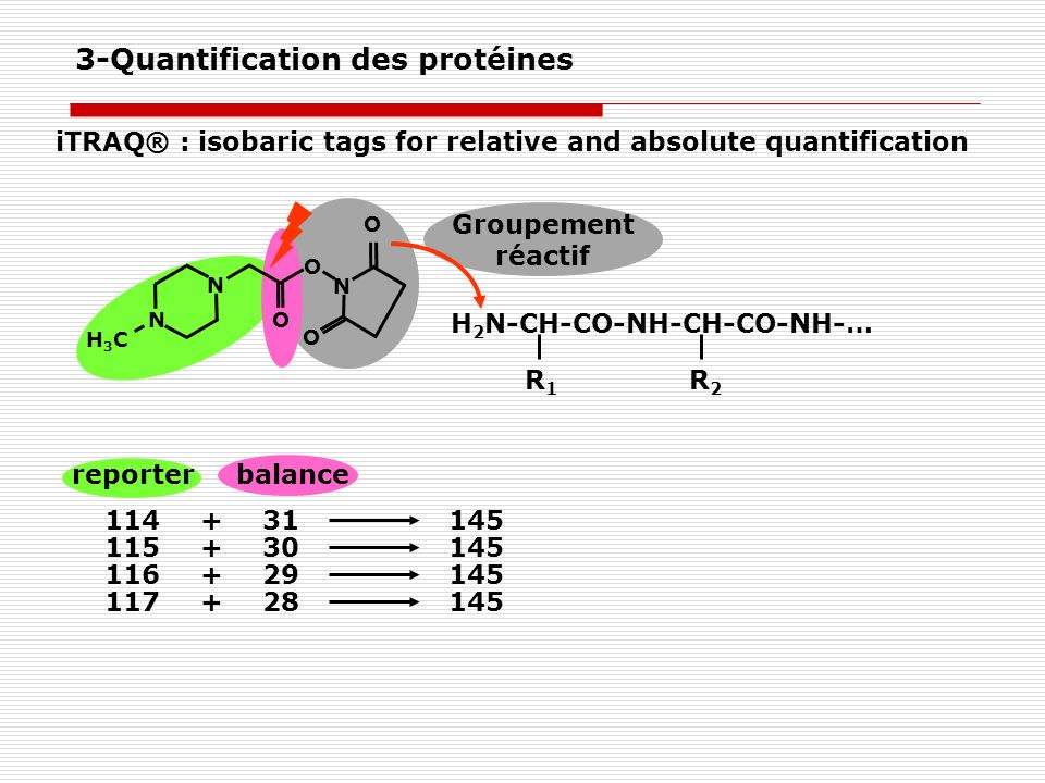iTRAQ® : isobaric tags for relative and absolute quantification reporterbalance 11431+145 11530+145 11629+145 11728+145 Groupement réactif H 2 N-CH-CO