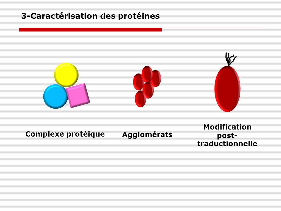 3-Caractérisation des protéines Complexe protéique Agglomérats Modification post- traductionnelle