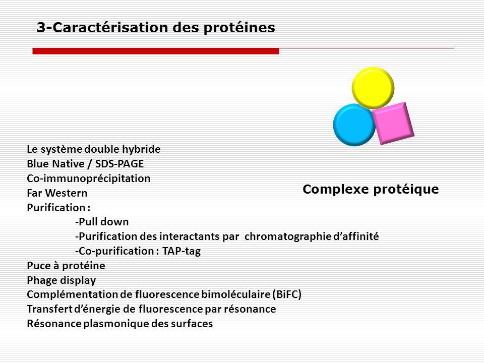 Complexe protéique Le système double hybride Blue Native / SDS-PAGE Co-immunoprécipitation Far Western Purification : -Pull down -Purification des int