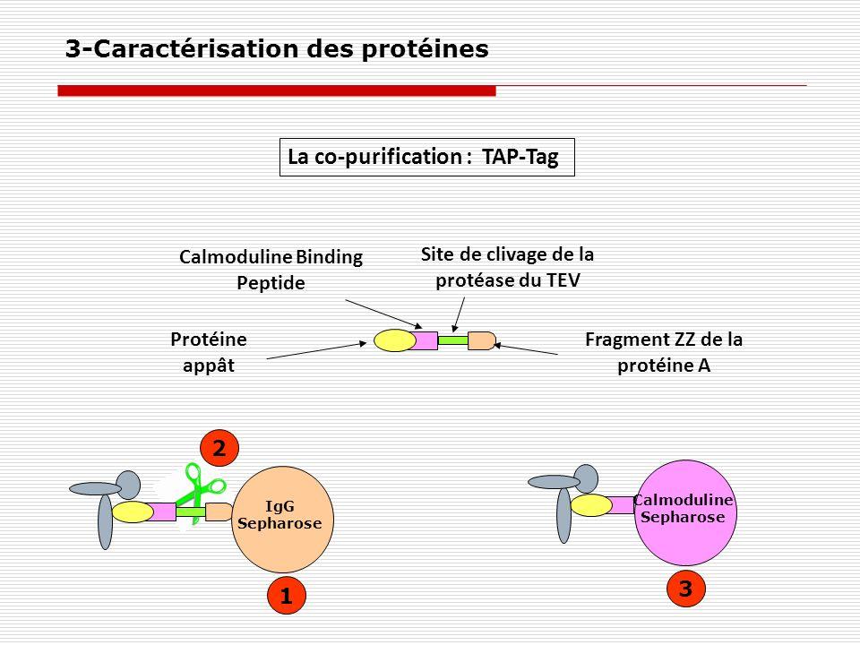 La co-purification : TAP-Tag Protéine appât Calmoduline Binding Peptide Site de clivage de la protéase du TEV Fragment ZZ de la protéine A IgG Sepharo