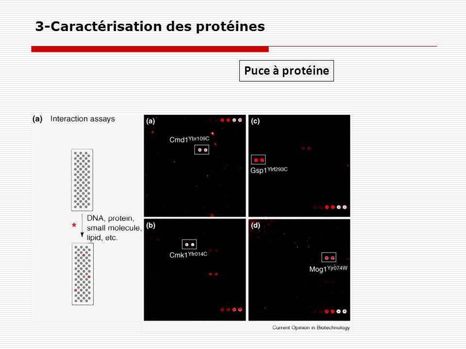 Puce à protéine 3-Caractérisation des protéines