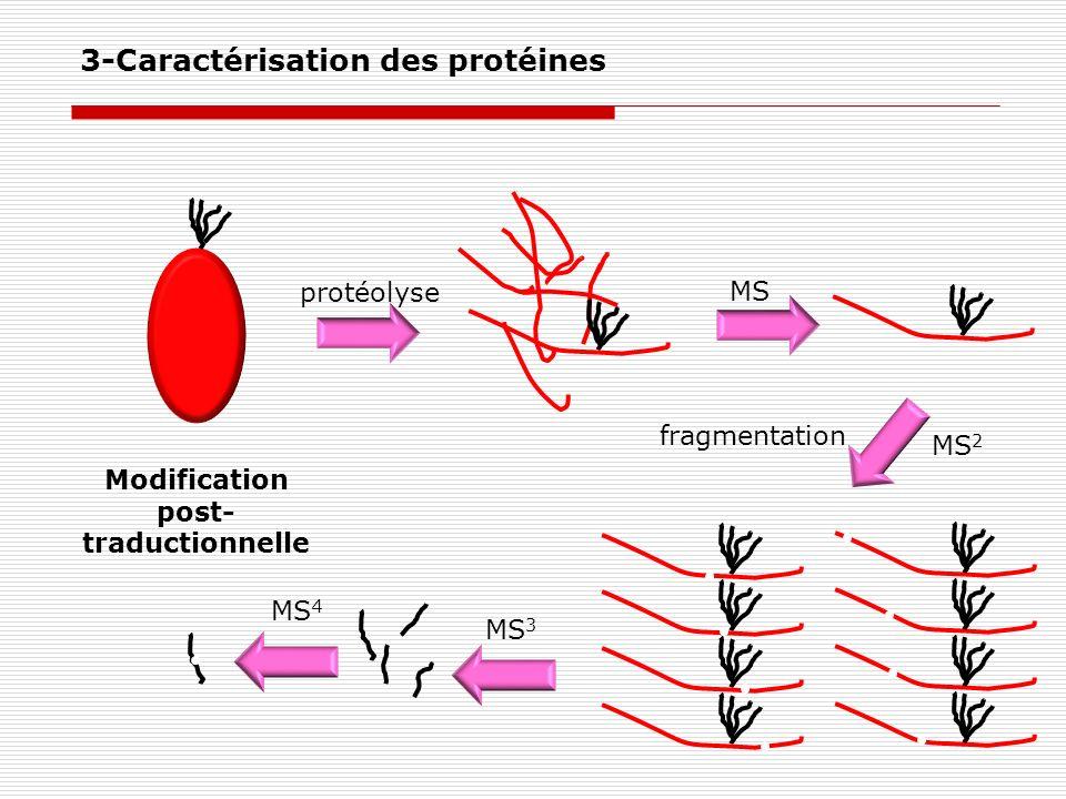 Modification post- traductionnelle MS fragmentation protéolyse MS 2 MS 3 MS 4 3-Caractérisation des protéines