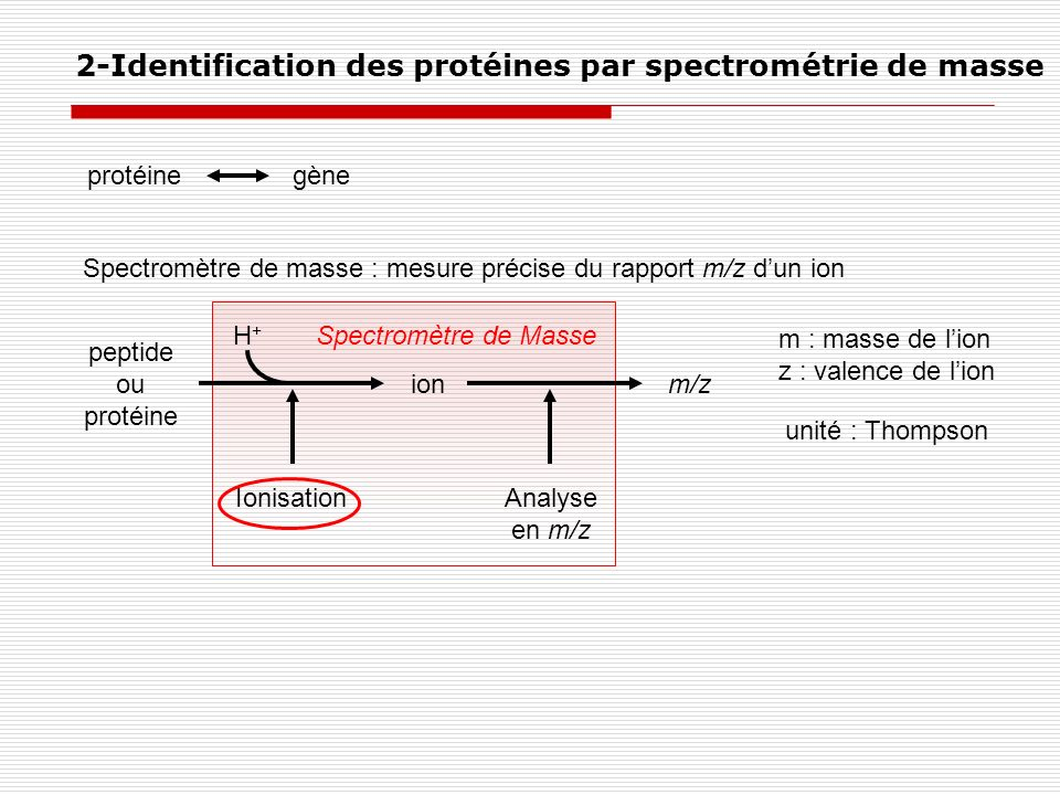 Spectromètre de masse : mesure précise du rapport m/z dun ion peptide ou protéine ionm/z m : masse de lion z : valence de lion unité : Thompson Ionisa