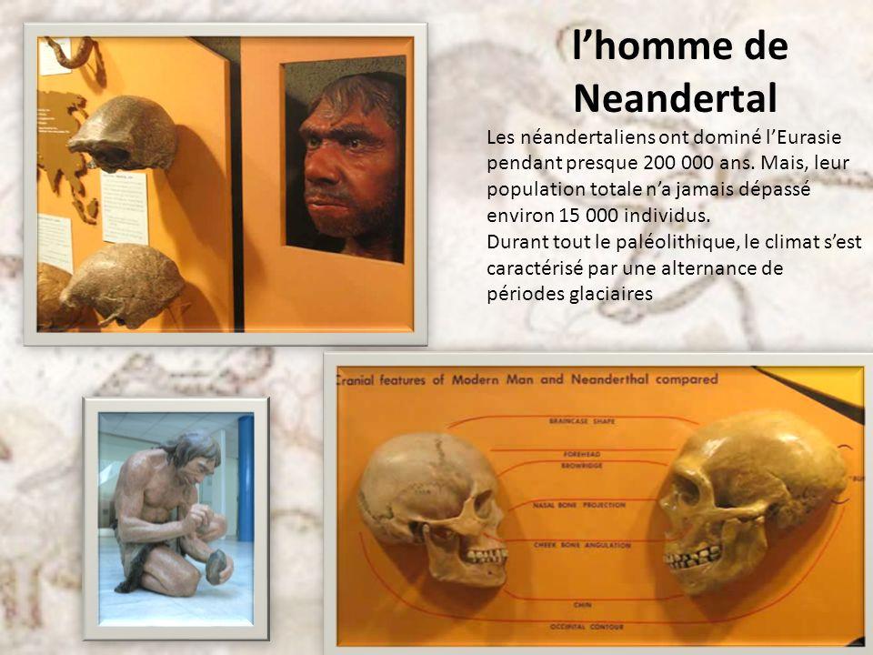 Portrait de lhomme de Neandertal Un cerveau plus volumineux que celui de lHomme moderne : environ 1 500 ml contre 1 400 ml Bourrelet sus-orbitaire saillant Os du nez fortement relevés Mandibule massive Menton fuyant Taille denviron 1,60 m pour les hommes pour un poids moyen de 84 kg Taille denviron 1,57 m pour les femmes pour un poids moyen de 67 kg Muscles hypertrophiés Sur le plan génétique, les néandertaliens sont identiques aux Hommes modernes à 99,5%.