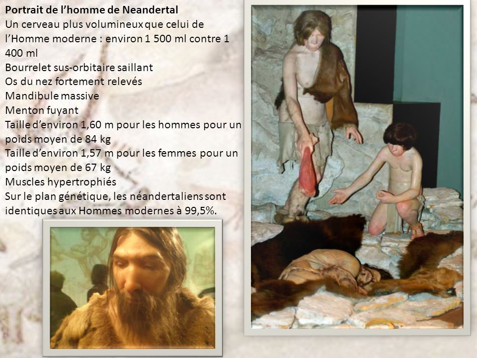 Portrait de lhomme de Neandertal Un cerveau plus volumineux que celui de lHomme moderne : environ 1 500 ml contre 1 400 ml Bourrelet sus-orbitaire sai