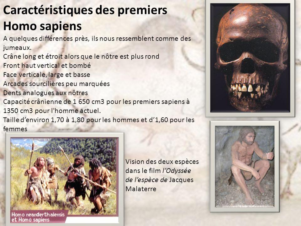 Caractéristiques des premiers Homo sapiens A quelques différences près, ils nous ressemblent comme des jumeaux. Crâne long et étroit alors que le nôtr