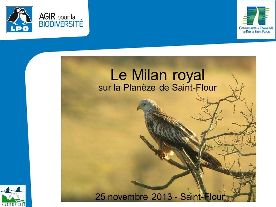 13 juin 2013 Le Milan royal sur la Planèze de Saint-Flour 25 novembre 2013 - Saint-Flour