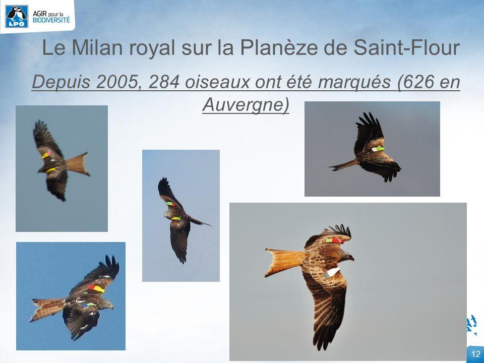 12 Le Milan royal sur la Planèze de Saint-Flour Depuis 2005, 284 oiseaux ont été marqués (626 en Auvergne)