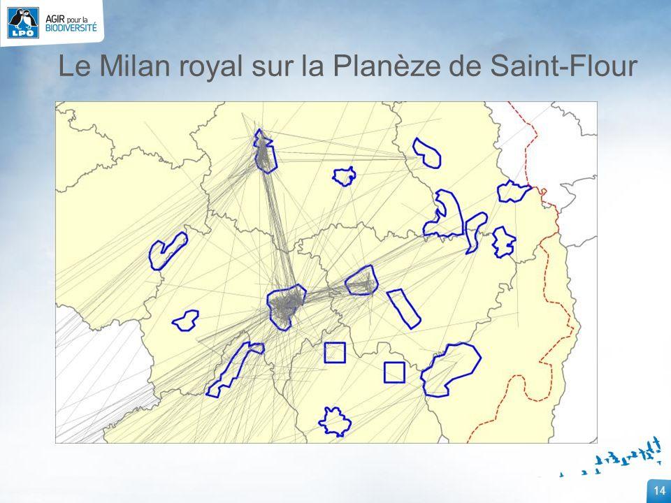 14 Le Milan royal sur la Planèze de Saint-Flour