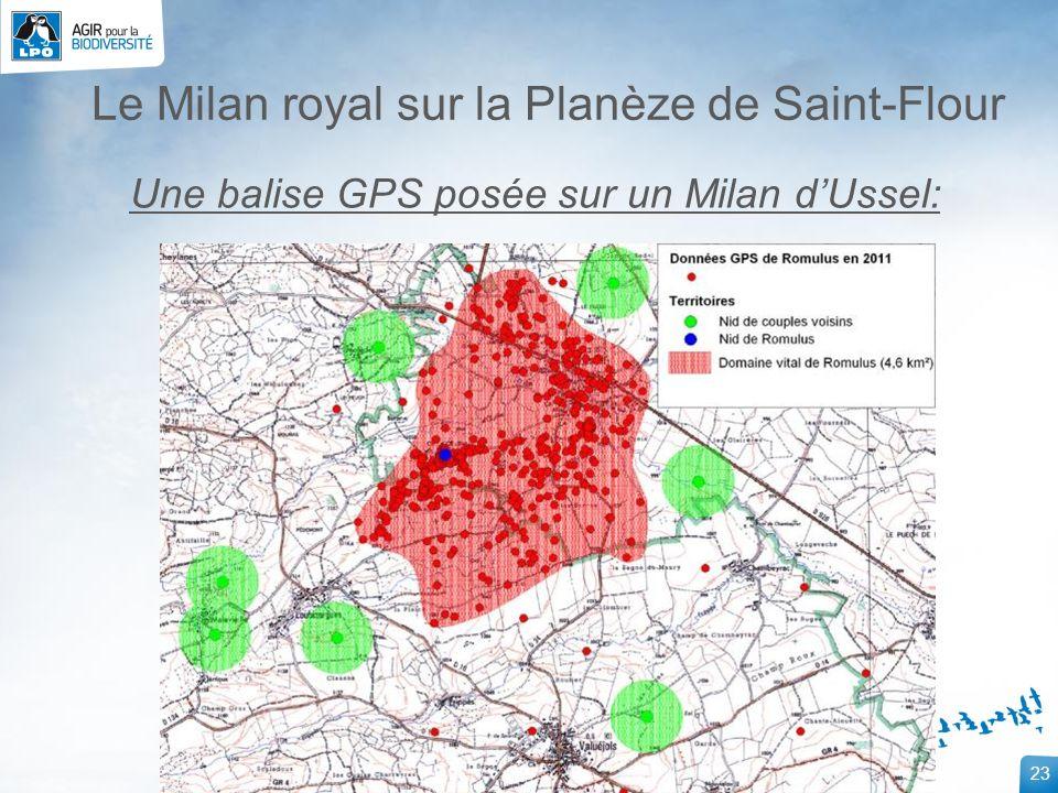 23 Le Milan royal sur la Planèze de Saint-Flour Une balise GPS posée sur un Milan dUssel: