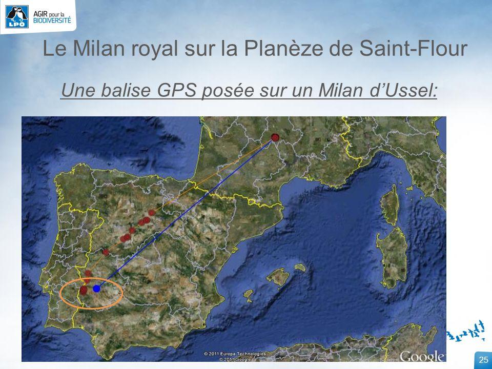 25 Le Milan royal sur la Planèze de Saint-Flour Une balise GPS posée sur un Milan dUssel: