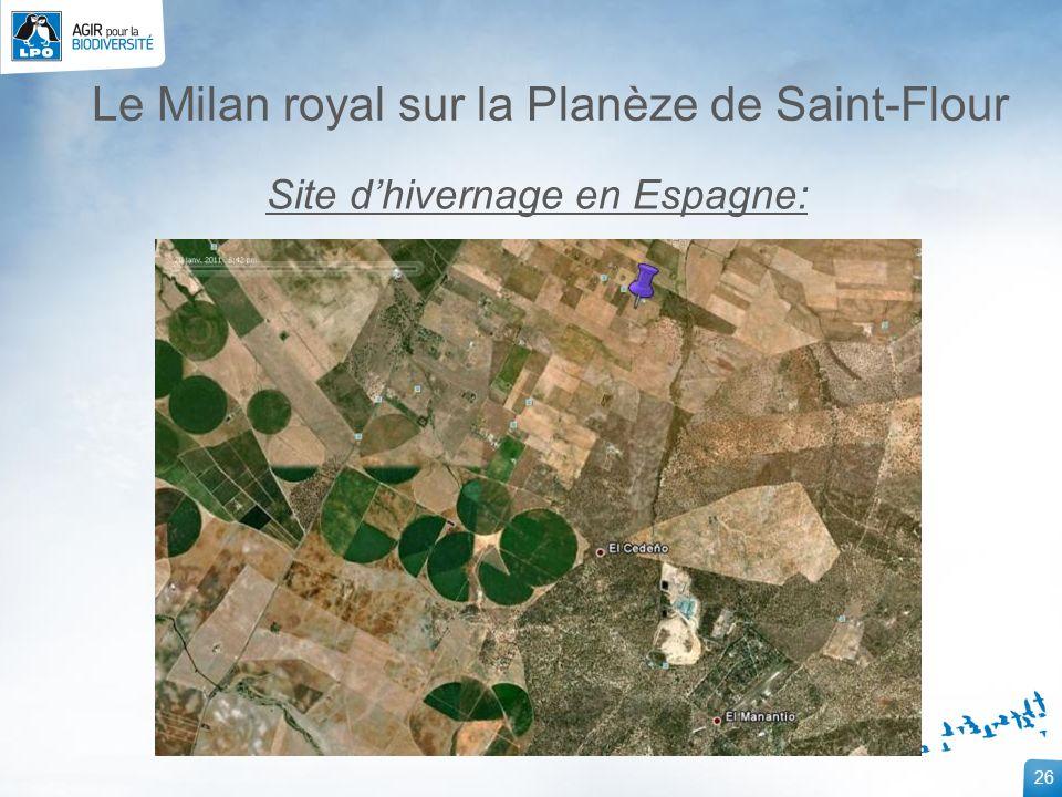 26 Le Milan royal sur la Planèze de Saint-Flour Site dhivernage en Espagne: