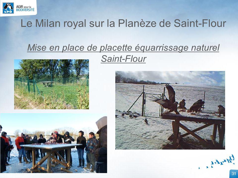 31 Le Milan royal sur la Planèze de Saint-Flour Mise en place de placette équarrissage naturel Saint-Flour