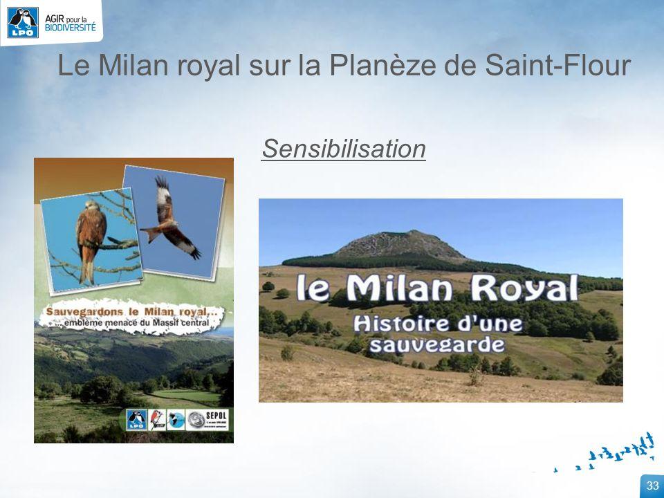 33 Le Milan royal sur la Planèze de Saint-Flour Sensibilisation