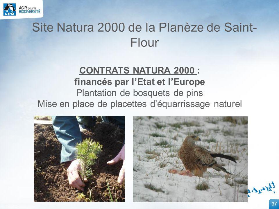 37 Site Natura 2000 de la Planèze de Saint- Flour CONTRATS NATURA 2000 : financés par lEtat et lEurope Plantation de bosquets de pins Mise en place de