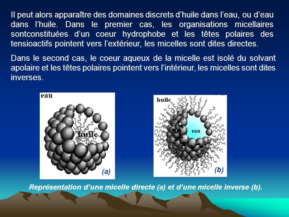 Représentation dune micelle directe (a) et dune micelle inverse (b). Il peut alors apparaître des domaines discrets dhuile dans leau, ou deau dans lhu