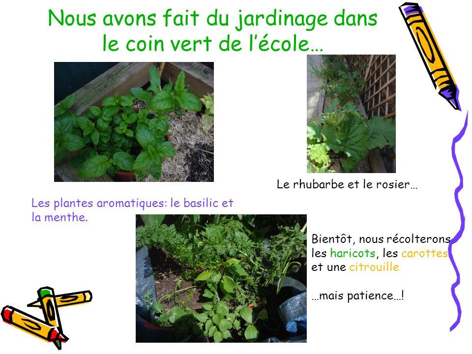 Les plantes aromatiques: le basilic et la menthe. Le rhubarbe et le rosier… Bientôt, nous récolterons les haricots, les carottes et une citrouille …ma