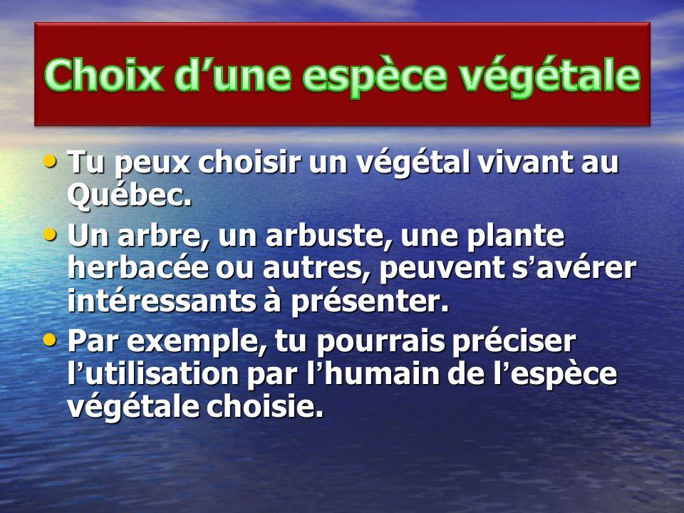 Tu peux choisir un végétal vivant au Québec. Tu peux choisir un végétal vivant au Québec. Un arbre, un arbuste, une plante herbacée ou autres, peuvent