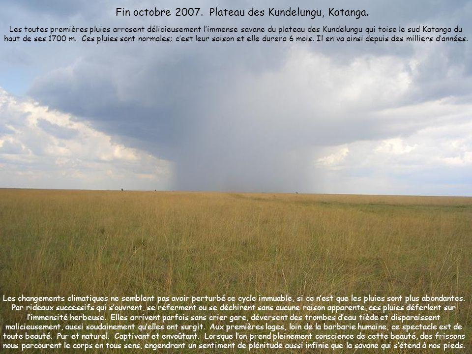 Les changements climatiques ne semblent pas avoir perturbé ce cycle immuable, si ce nest que les pluies sont plus abondantes. Par rideaux successifs q