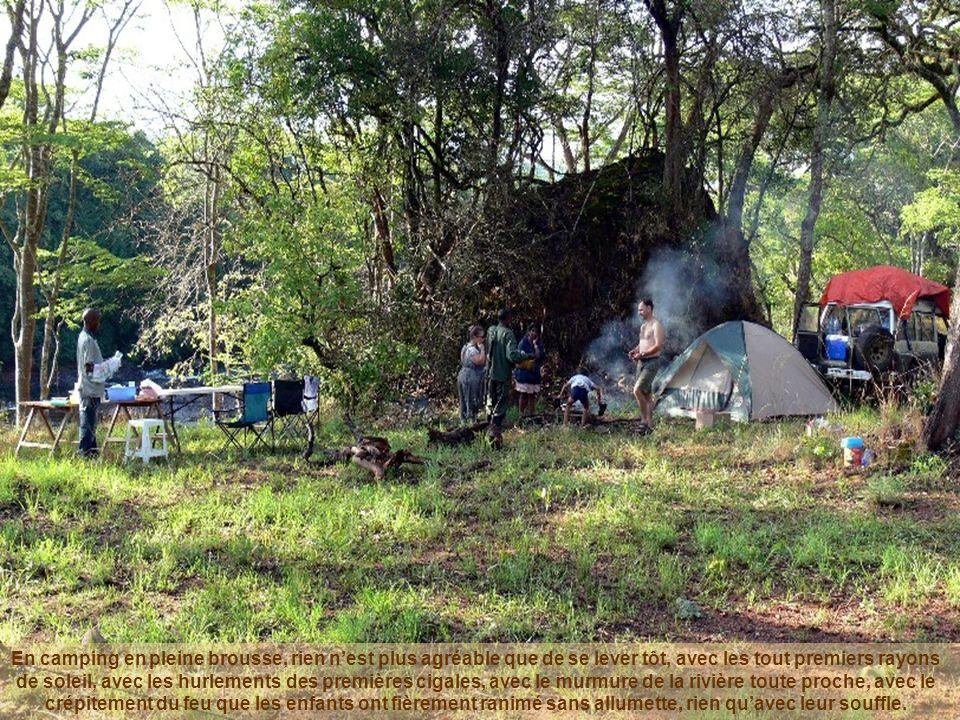 En camping en pleine brousse, rien nest plus agréable que de se lever tôt, avec les tout premiers rayons de soleil, avec les hurlements des premières