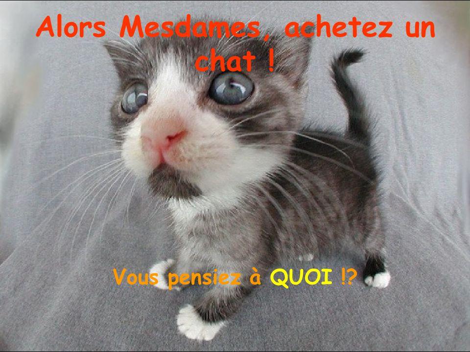 Alors Mesdames, achetez un chat ! Vous pensiez à QUOI !?