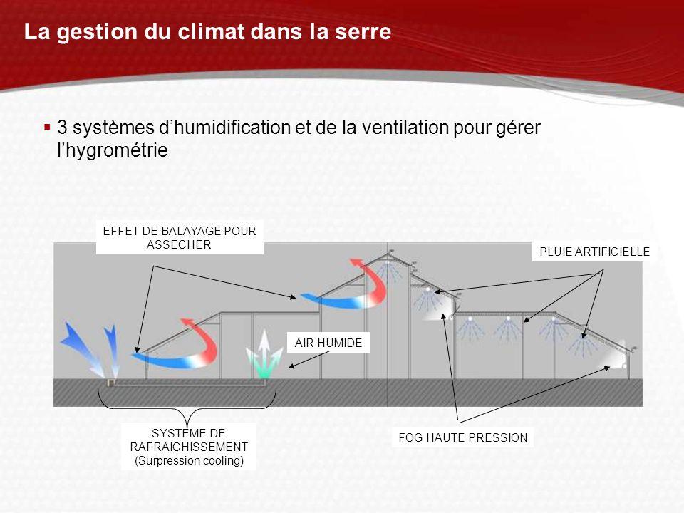 La gestion du climat dans la serre PLUIE ARTIFICIELLE FOG HAUTE PRESSION EFFET DE BALAYAGE POUR ASSECHER SYSTEME DE RAFRAICHISSEMENT (Surpression cool