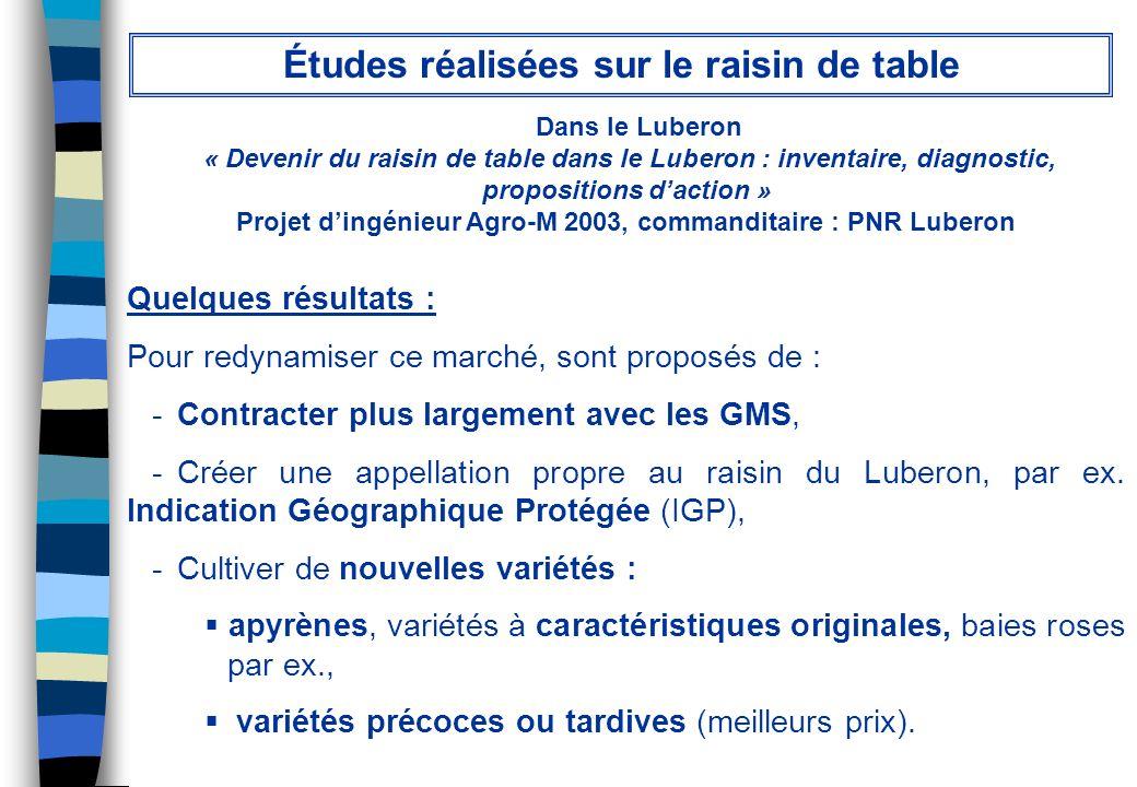 Dans le Luberon « Devenir du raisin de table dans le Luberon : inventaire, diagnostic, propositions daction » Projet dingénieur Agro-M 2003, commandit