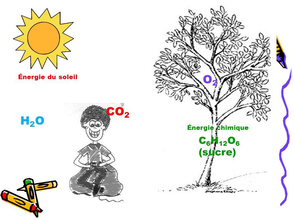 O2O2 C 6 H 12 O 6 (sucre) Énergie chimique CO 2 Énergie du soleil H2OH2O