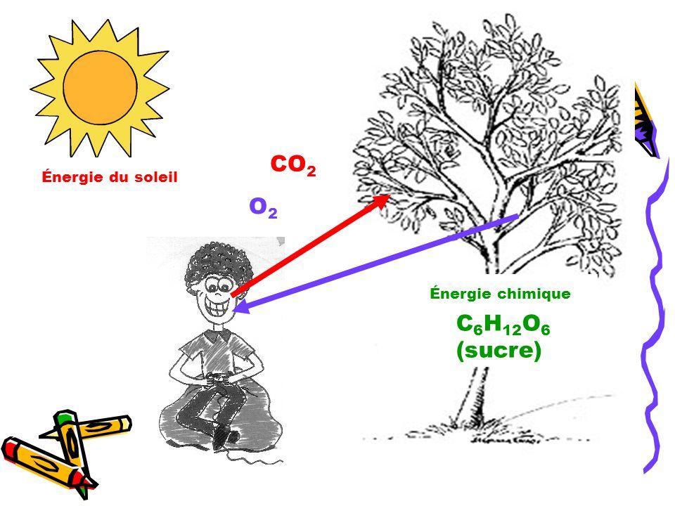 O2O2 C 6 H 12 O 6 (sucre) Énergie chimique CO 2 Énergie du soleil