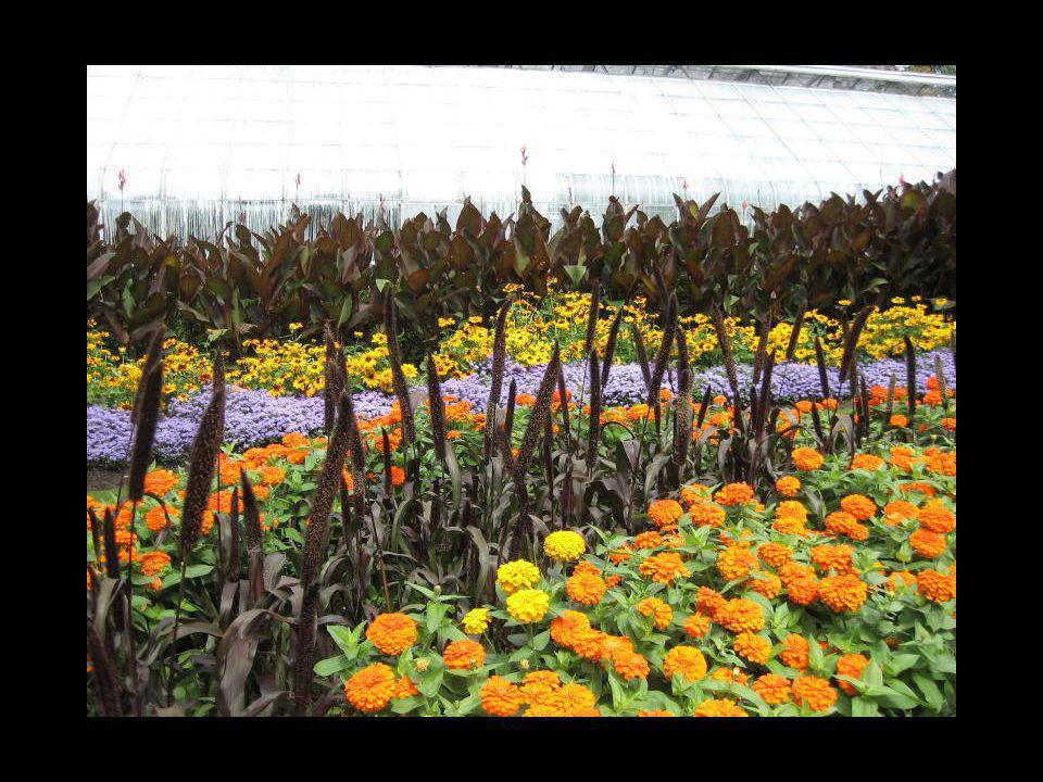 Vraiment en bonne santé ces belles fleurs et bien entretenue également