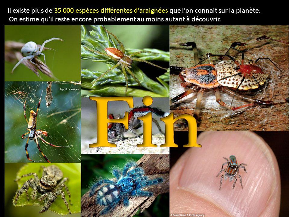 Il existe plus de 35 000 espèces différentes d'araignées que l'on connait sur la planète. On estime qu'il reste encore probablement au moins autant à