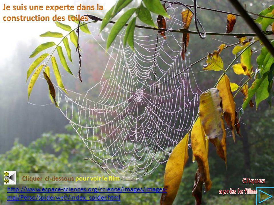 http://www.espace-sciences.org/science/images/images- maj/Perso/spiderweb/index_spider.html Cliquer ci-dessous Cliquer ci-dessous pour voir le film