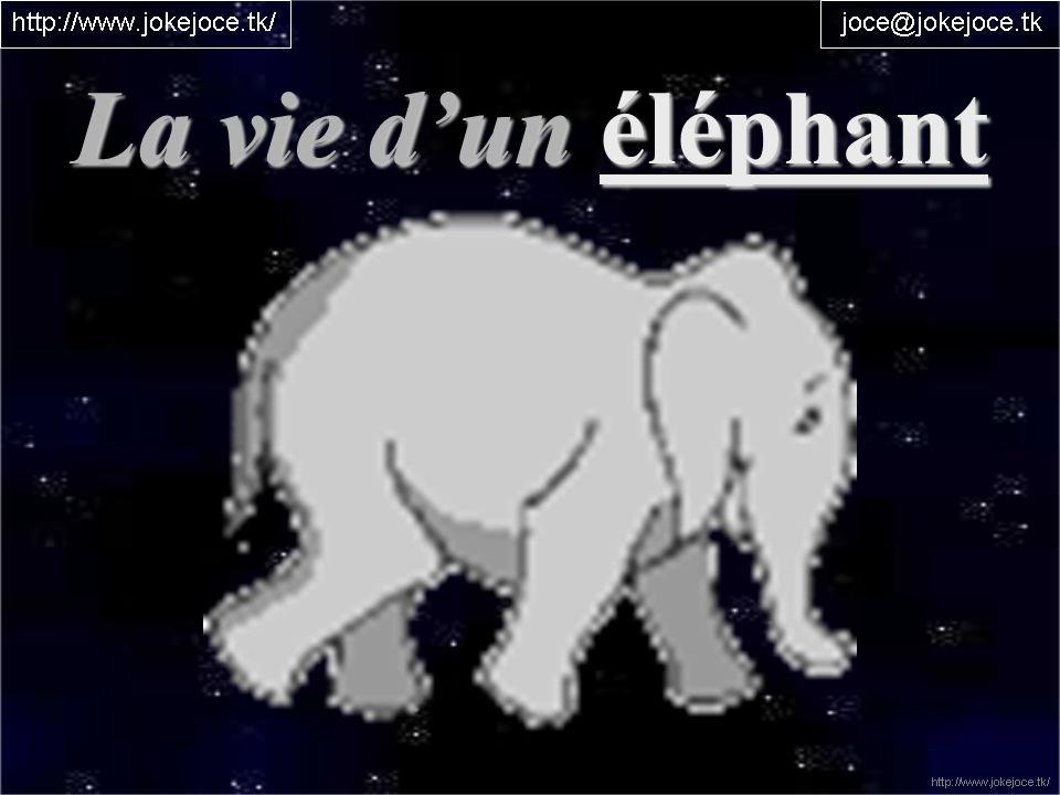 La vie dun éléphant