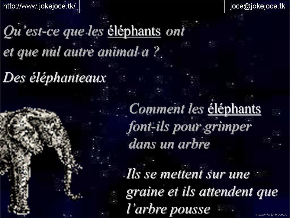 Quest-ce que les éléphants ont et que nul autre animal a ? Des éléphanteaux Comment les éléphants font-ils pour grimper dans un arbre Ils se mettent s
