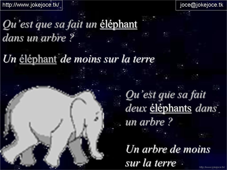 Quest que sa fait un éléphant dans un arbre ? Un éléphant de moins sur la terre Quest que sa fait deux éléphants dans un arbre ? Un arbre de moins sur