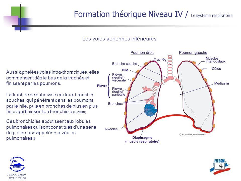Patrick Baptiste MF1 n° 22108 Formation théorique Niveau IV / Le système respiratoire Les voies aériennes inférieures Aussi appelées voies intra-thora