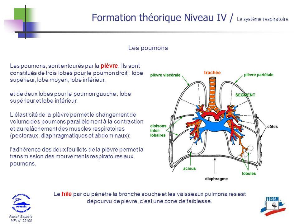 Patrick Baptiste MF1 n° 22108 Formation théorique Niveau IV / Le système respiratoire Les poumons Les poumons, sont entourés par la plèvre. Ils sont c