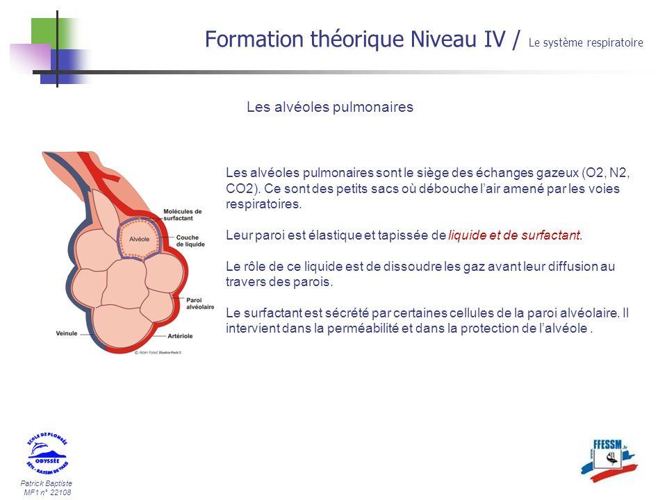 Patrick Baptiste MF1 n° 22108 Formation théorique Niveau IV / Le système respiratoire Les alvéoles pulmonaires Les alvéoles pulmonaires sont le siège