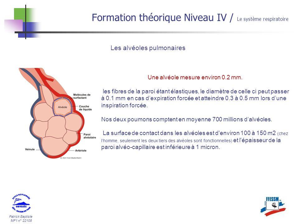 Patrick Baptiste MF1 n° 22108 Formation théorique Niveau IV / Le système respiratoire Les alvéoles pulmonaires Une alvéole mesure environ 0.2 mm. les