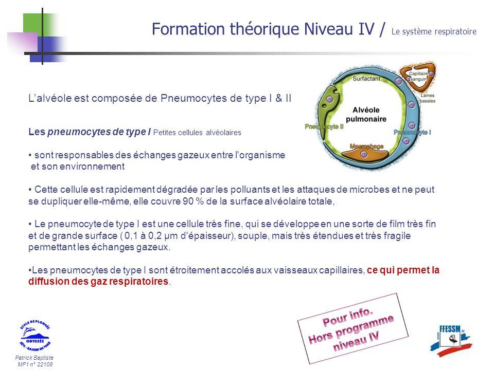 Patrick Baptiste MF1 n° 22108 Lalvéole est composée de Pneumocytes de type I & II Formation théorique Niveau IV / Le système respiratoire Les pneumocy
