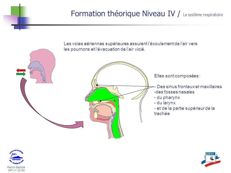 Patrick Baptiste MF1 n° 22108 Formation théorique Niveau IV / Le système respiratoire Bien quil ninterviennent pas directement dans le cycle respiratoire, les sinus font partie des voies aériennes supérieures.
