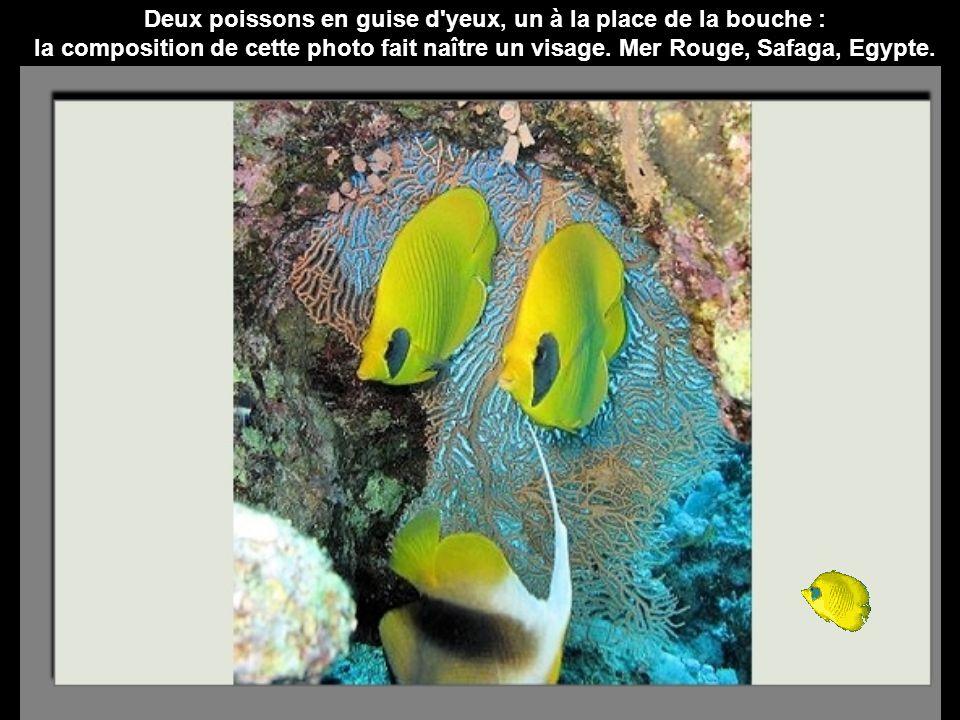 Deux poissons en guise d yeux, un à la place de la bouche : la composition de cette photo fait naître un visage.